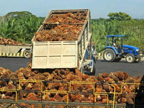 L'agro-industriel Pamol, engagé dans la construction d'une nouvelle huilerie